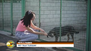 PET TALK TUESDAY - PETS AND RABIES