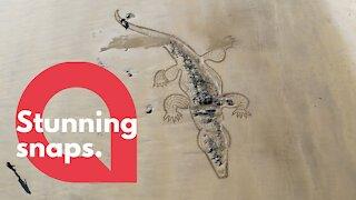Artist creates giant picture of crocodile using garden rake