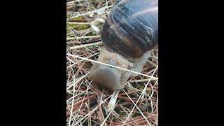 Snail Olympics High Jump
