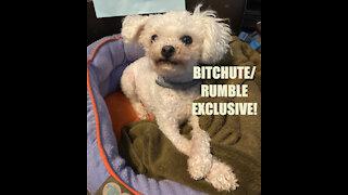 Rumble/Bitchute Exclusive Hot Take: Saturday News Blast!