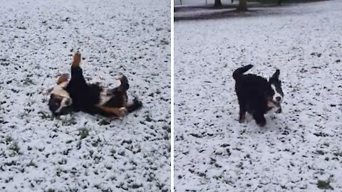 No one is happier than this puppy playing in the snow