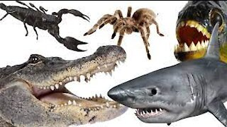 10 most dangerous animals in the World
