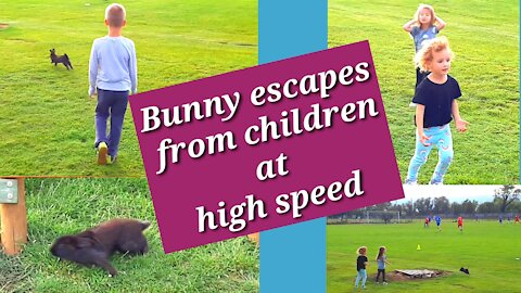 Bunny escapes from children at high speed, children jumping on the trampoline and turning heads