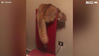 Voici Leonardo, un chat indépendant
