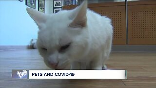 Pets and COVID-19: What you should know