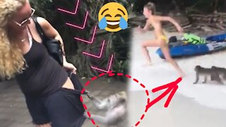Crazy Monkey, attack people 🤪🤪🙈