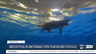 Indoor pool in Anchorage open year-round for dogs