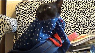 A cat hiding in a backpack
