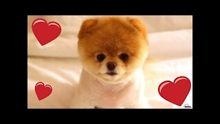Cute Pets And Funny Animals Compilation #9 - Pets Garden