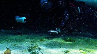 Scuba diver and crab share adorable interaction