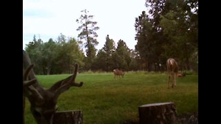 BABY Deer and Family!