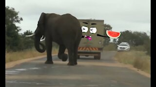 Elephant Attacks Car