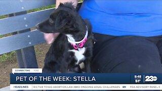 Pet of the Week: Stella