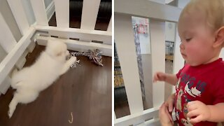 Baby plays with puppies at the pet store
