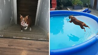 Dog hears the magic word, sprints from the basement to jump in pool