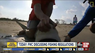 TODAY | FWC to discuss regulations for shark fishing