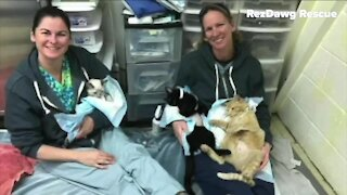 Denver7 viewers help dog rescue group
