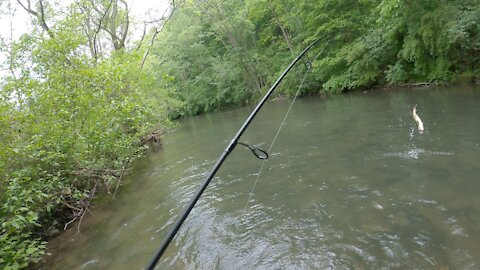 DAY 1 Testing Single vs Treble Hooks With Some Big Trout Caught