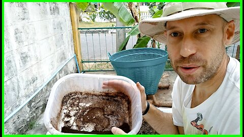 18 Day Tropical Hot Compost Method—Day 10 4th Flip