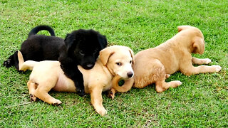 Puppies Linked to Multi-State Infection Outbreak