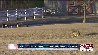 Bill would allow coyote hunting at night
