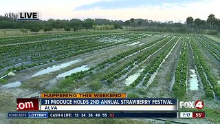 31 Produce holds 2nd annual Strawberry Festival in Alva