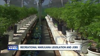 Possible jobs with legalization of marijuana
