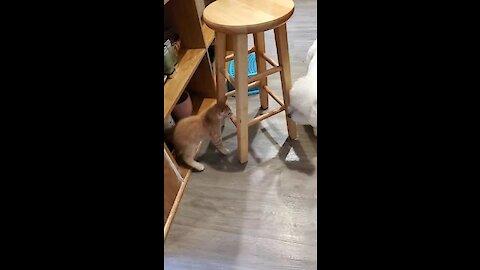Dog desperately attempts to befriend new kitten addition