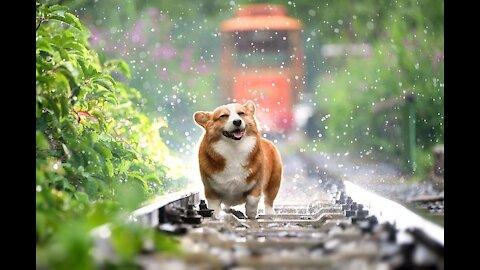 Dog play in summar