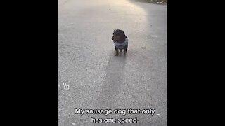 Slow running dog