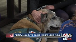 Therapy dogs called into help students destress from tests