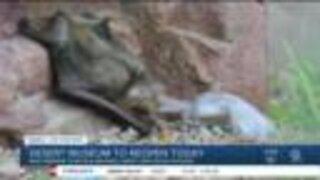 Arizona-Sonora Desert Museum set to reopen June 16