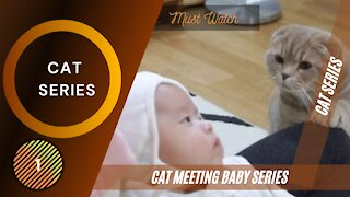 Cats Meeting Babies for first time - 1