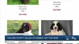 Online puppy sales schemes on the rise