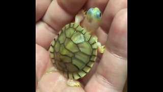 Cute baby Animals - Cutest Animals
