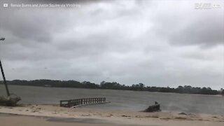 Delfino spiaggiato a causa dell'uragano