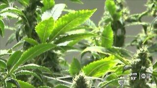 Florida senators push bill to expunge low-level marijuana convictions