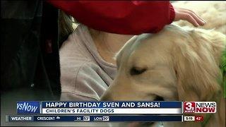 Children's hospital dogs