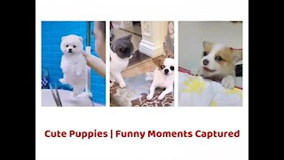 Cute Baby Dogs Funny Videos Compilation | Funny Dog Videos