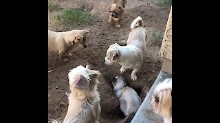 Cat plays tag with entire pack of dogs