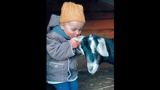 Adorable toddler playing with her goat friend