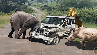 Top 10 attack | Wild animals attack car