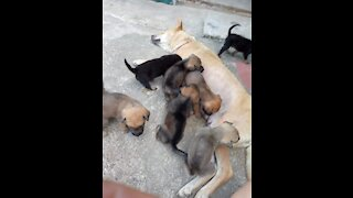 These puppies live in the same barn, watch the ending video!.