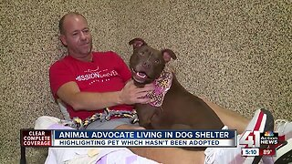 Local animal advocate moves into shelter dog's room