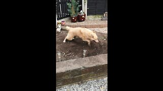 Adorable Rescue Dog Loves To Play In Soil