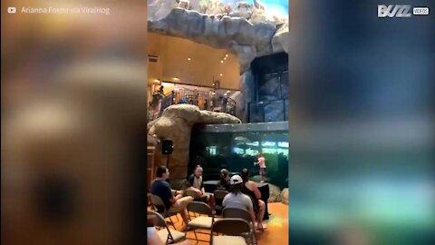 Homem mergulha num aquário cheio de peixes