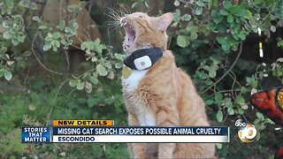 Missing cat search exposes possible animal cruelty case