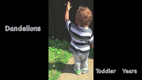 Blowing Dandelions (Simple Toddler Entertainment)