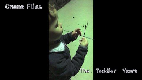 Crane Flies (free toddler entertainment)