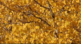 Colorado Fall Color 2016